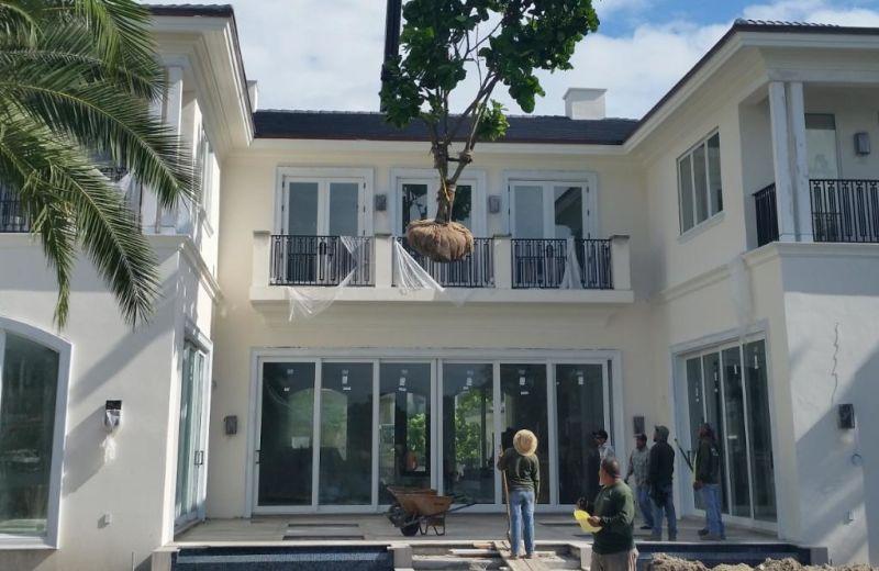 Tree Relocation Installation