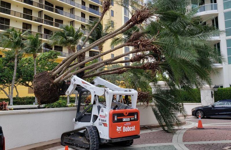 Landscaping Tree Installation