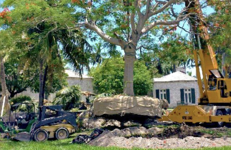 Crane Tree Relocation