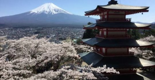Trip Muslim Japan Golden Route 6 Day