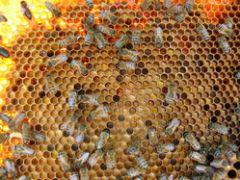 Le pollen frais est encore plus utile en hiver