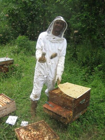 Réintroduction de la Reine dans sa ruche.