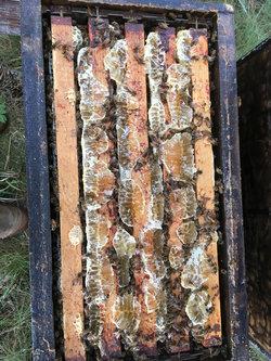 Récolte du miel de luzerne sur une ruchette
