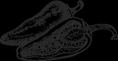 Illustration: Habanero Pepper Cut Open