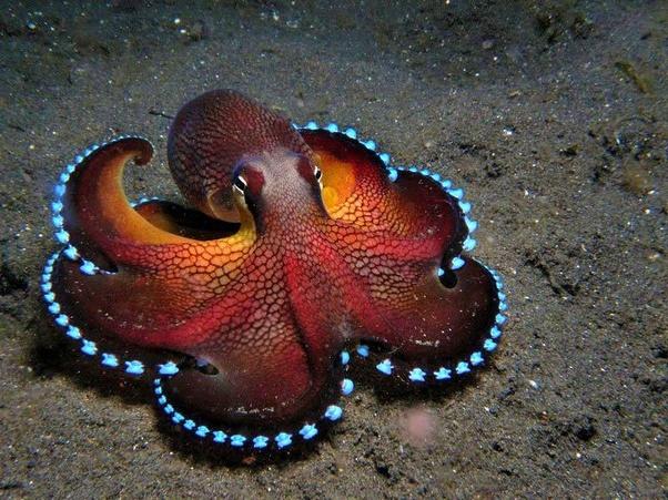octopus-colour-change