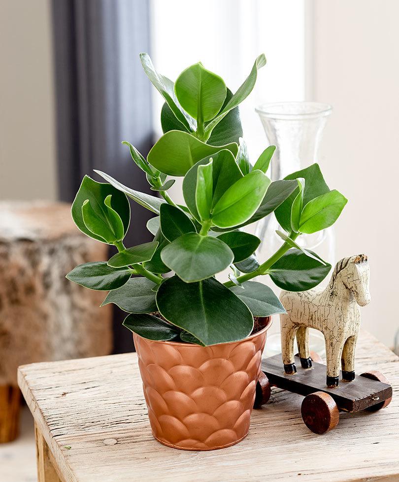 plante pour bureau simple plante dintrieur plante pour la maison ou le bureau yucca with plante. Black Bedroom Furniture Sets. Home Design Ideas