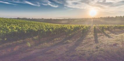 Les vins des meilleurs producteurs livrés chez vous