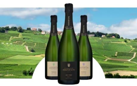 Champagne Agrapart et Fils
