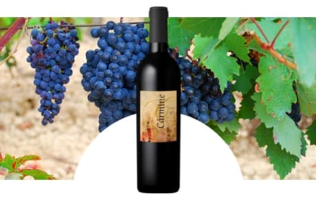 Crapula Wines