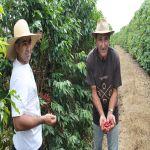 william-marco-antonio-harvesting_hx40k6