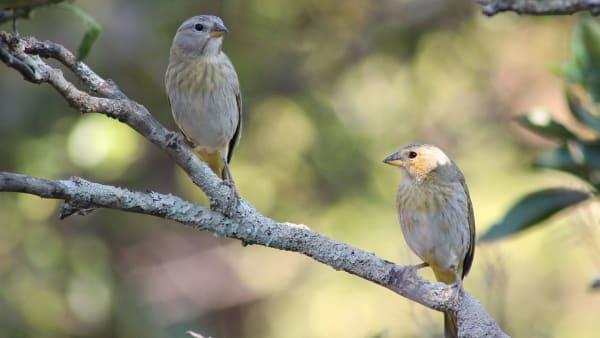 birds-at-farm_jlvkkw