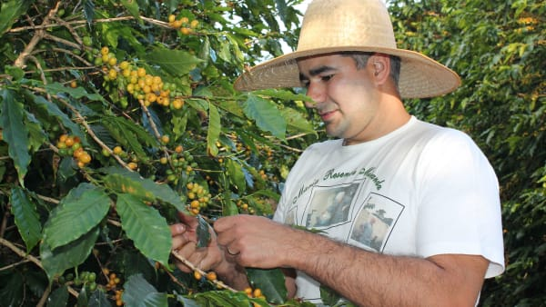 william-harvesting_gi19uk