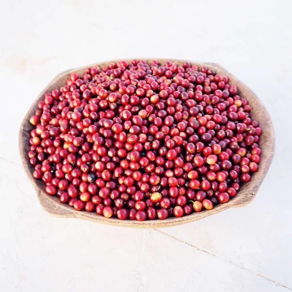 Red Cherries Mundo Novo