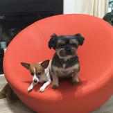 Lulu and Coco