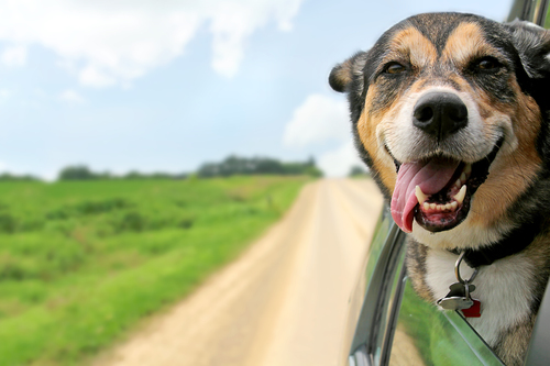 Pack Your Dog a Moving Day Kit