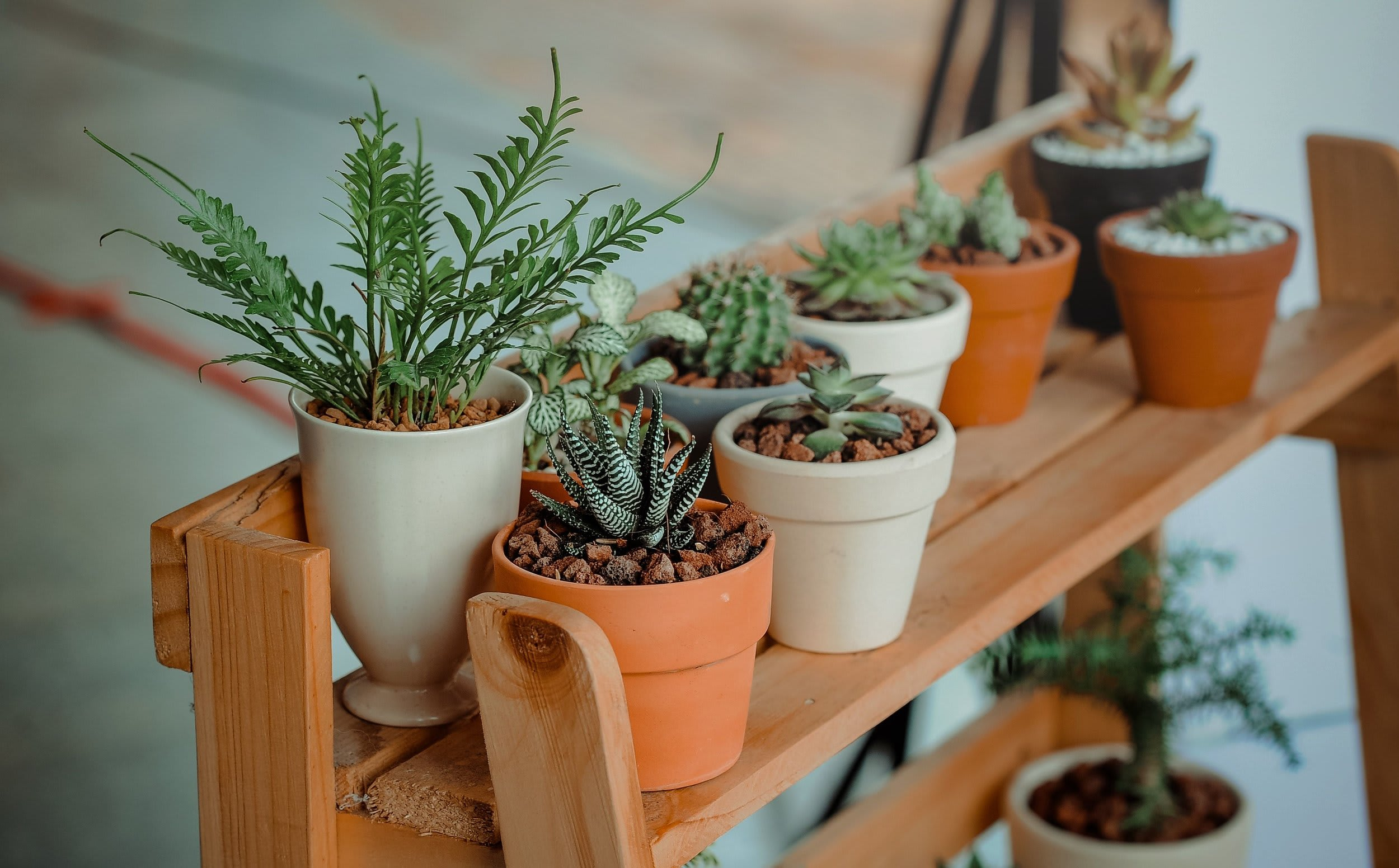 Moving Plants: A How-to Guide