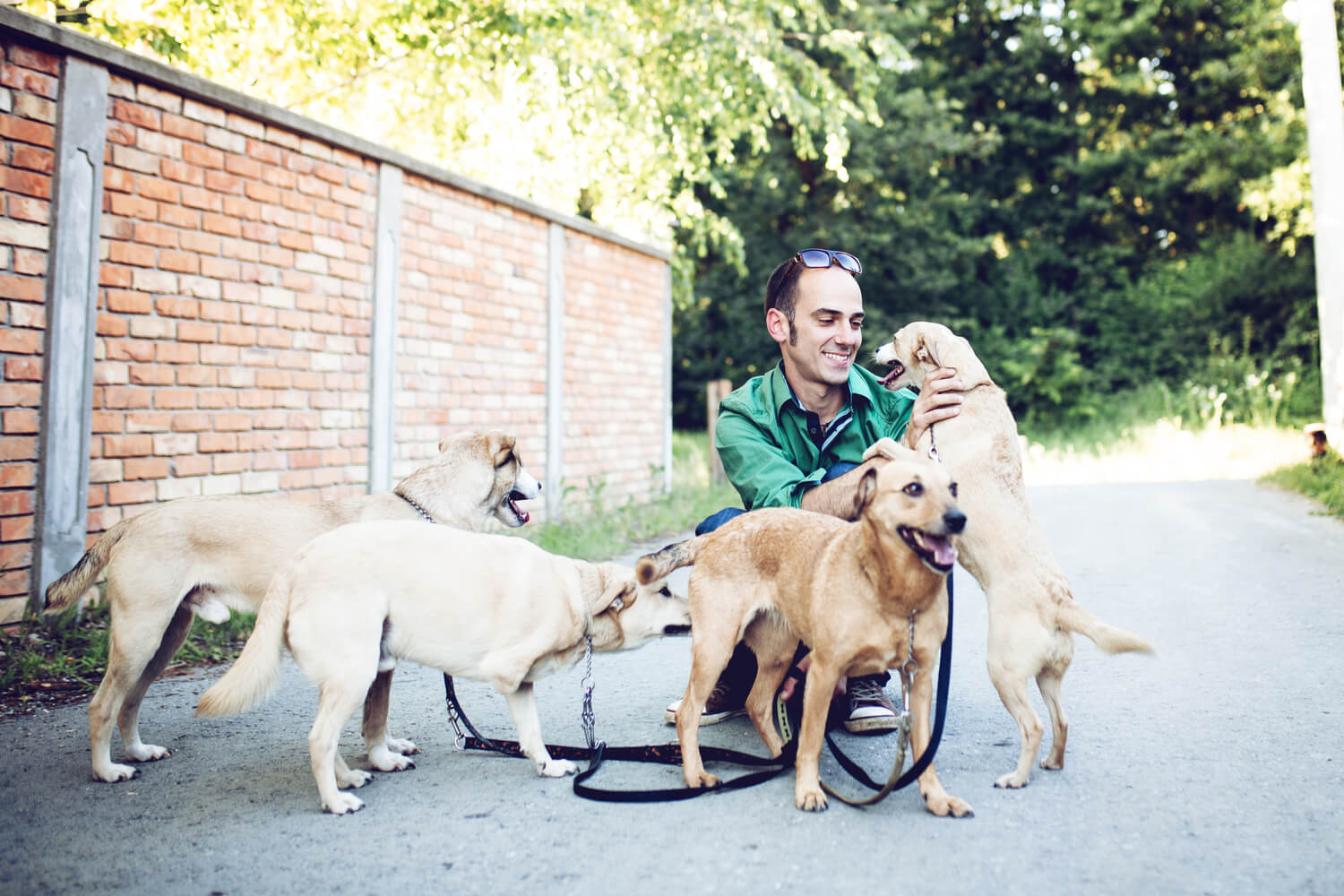 5 Pet Amenities To Attract Pet Owners and Keep Residents Happy