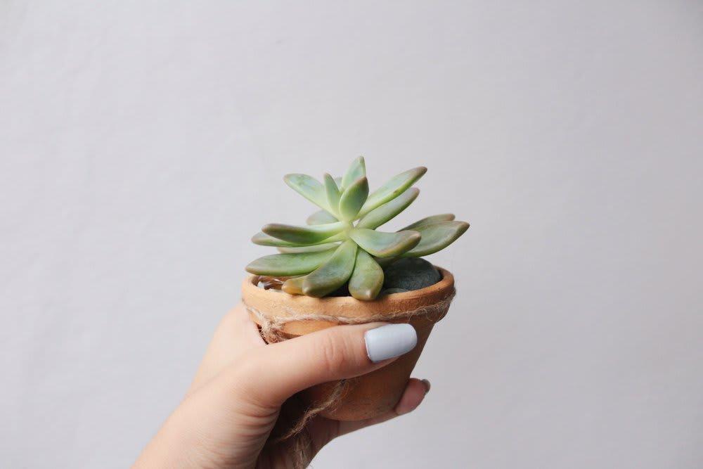 succulent-moving-plants