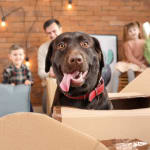 Everything You Need To Know About Choosing Pet Movers