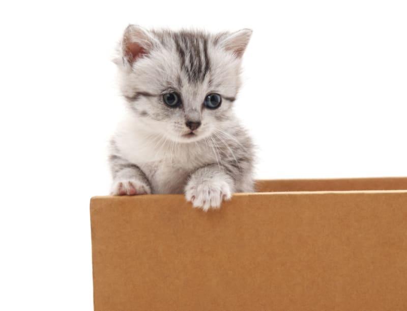The Ultimate Guide to Moving With Cats in 6 Steps