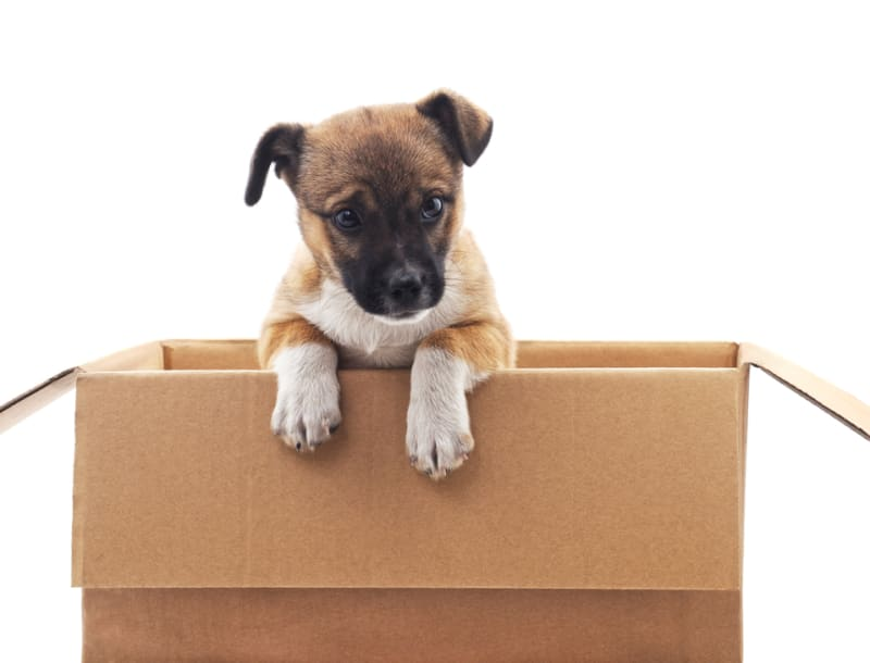 The Ultimate Guide to Moving with a Dog