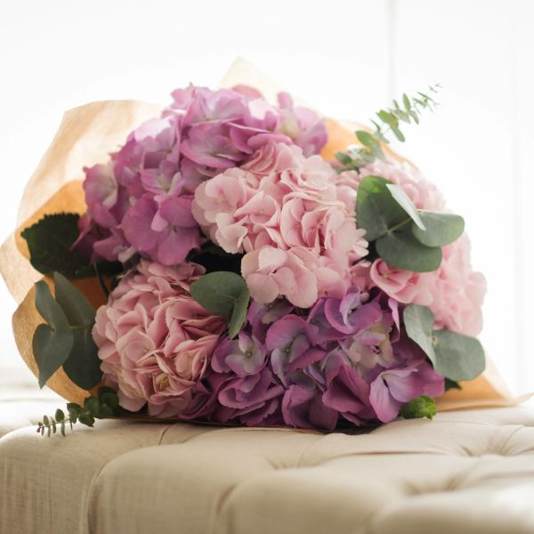 Hydrangea, Eucalyptus | Buy Flowers in Dubai UAE | Gifts | Cakes