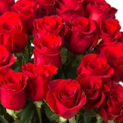Red Premium Rose buy order oline in Dubai