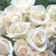 White Premium Rose buy order oline in Dubai