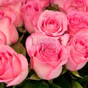 Pink Premium Rose buy order oline in Dubai