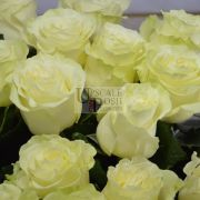 Yellow Premium Rose buy order oline in Dubai
