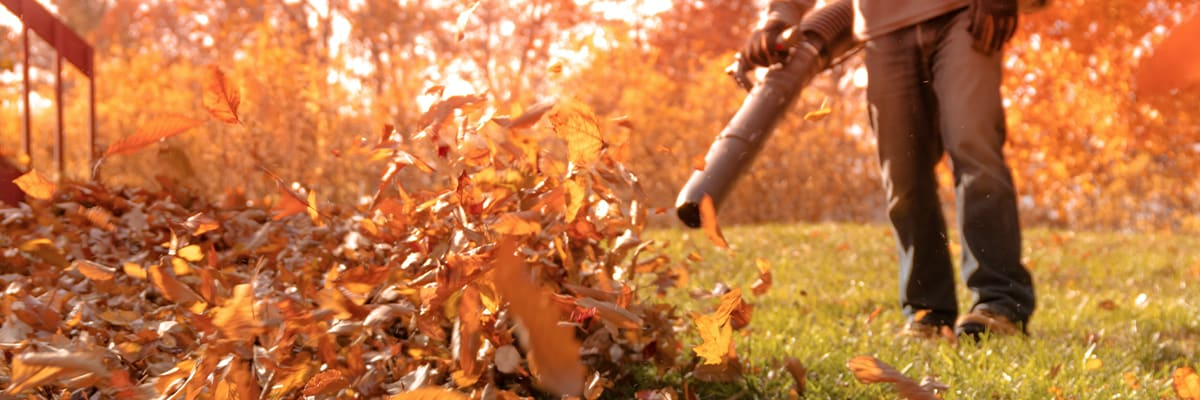 Compare Gas, Electric and Battery Leaf Blowers