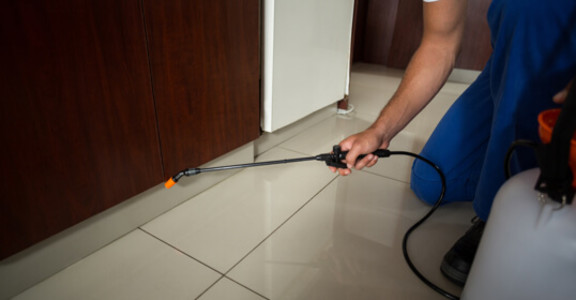 Pest Control Service in Jumeirah Lakes Towers, Dubai