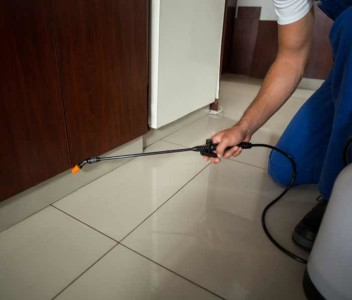 Top 10 Pest Control Services in Hyderabad | Safe & Certified Chemicals -  Urban Company