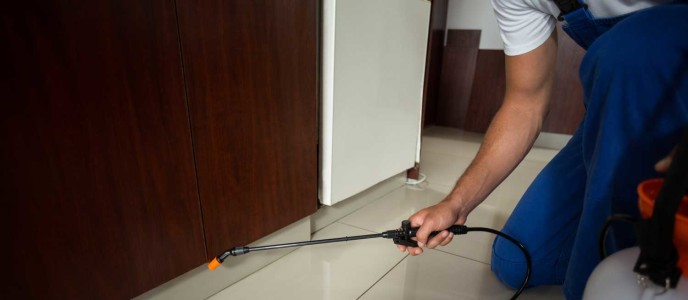 Cockroach Control Services in Delhi