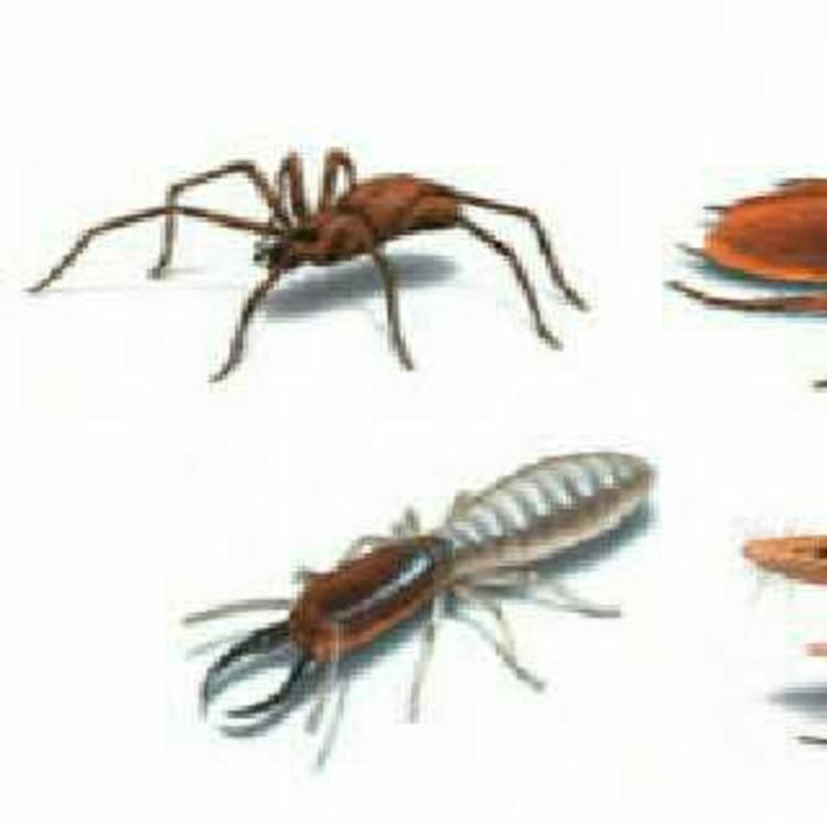 pest control Mumbai's image