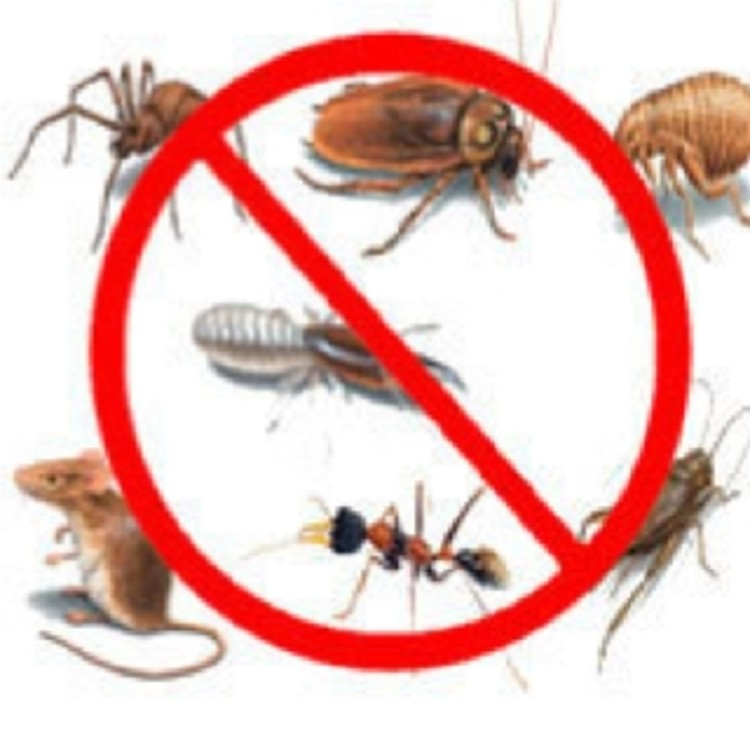 Pest all Care's image