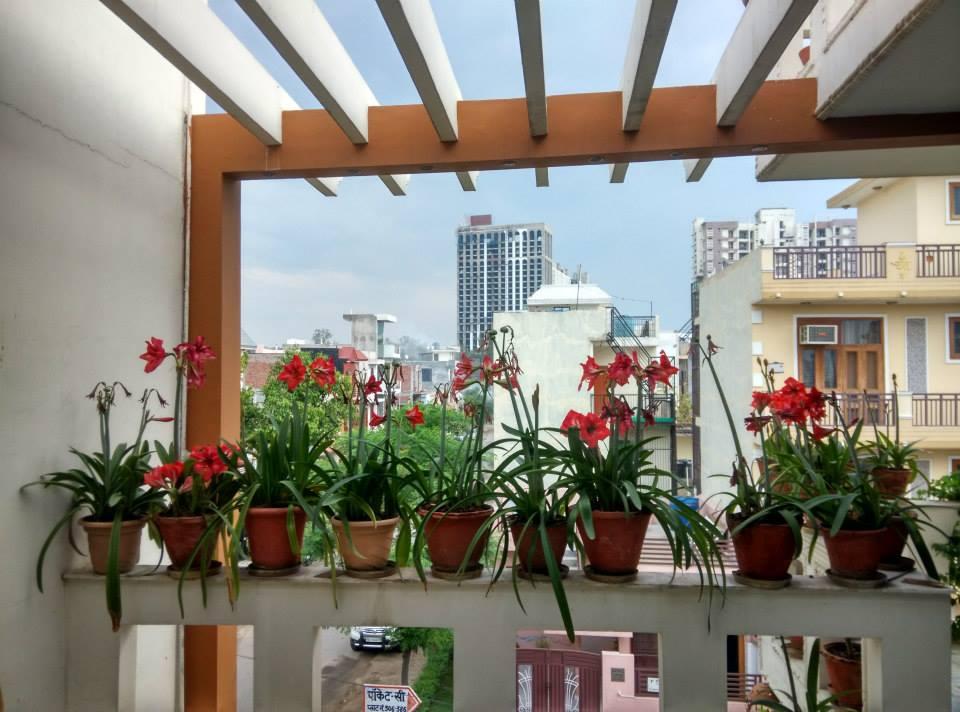 Hanging Garden of Babylon by Urban Upgrade Interiors Modern   Interior Design Photos & Ideas