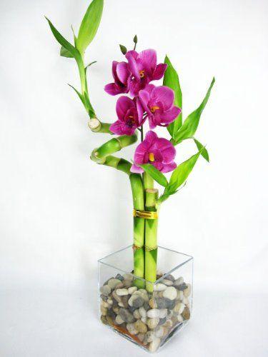 8a863e9597b31ff9ff4bfec84bc2bb8a--lucky-bamboo-plants-silk-orchids_nvx9xu Kisah Inspiratif - kisah Bunga Mawar dan Pohon Bambu Cerita Inspirasi Cerita Motivasi Cerpen Inspiratif