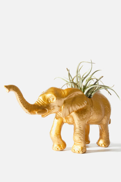 The Babar with Air Plant
