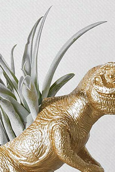 The Rex with Air Plant