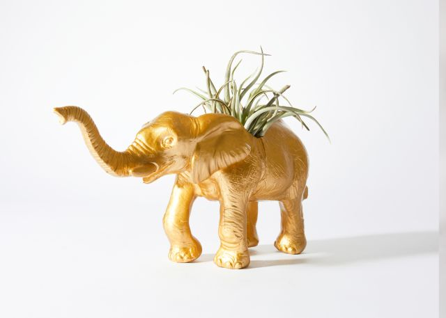 The Babar with Succulent Product Photo