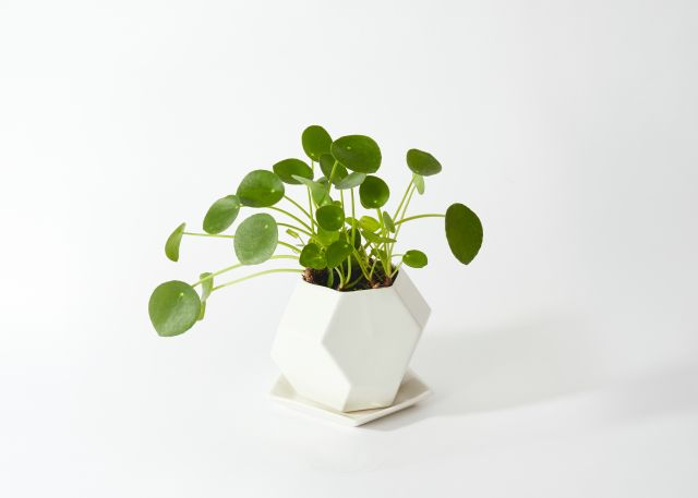 The Monet Product Photo