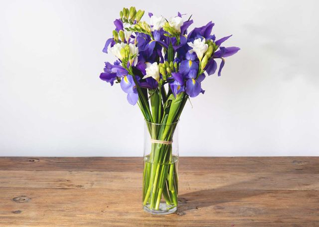 The Purple Iris Product Photo
