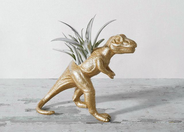 The Rex with Air Plant Product Photo