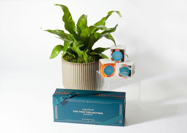 The Wonka Product Photo