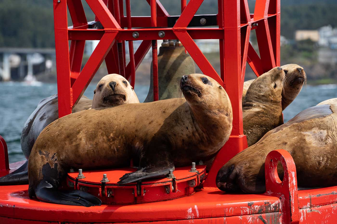Sea pups with the new camera setup