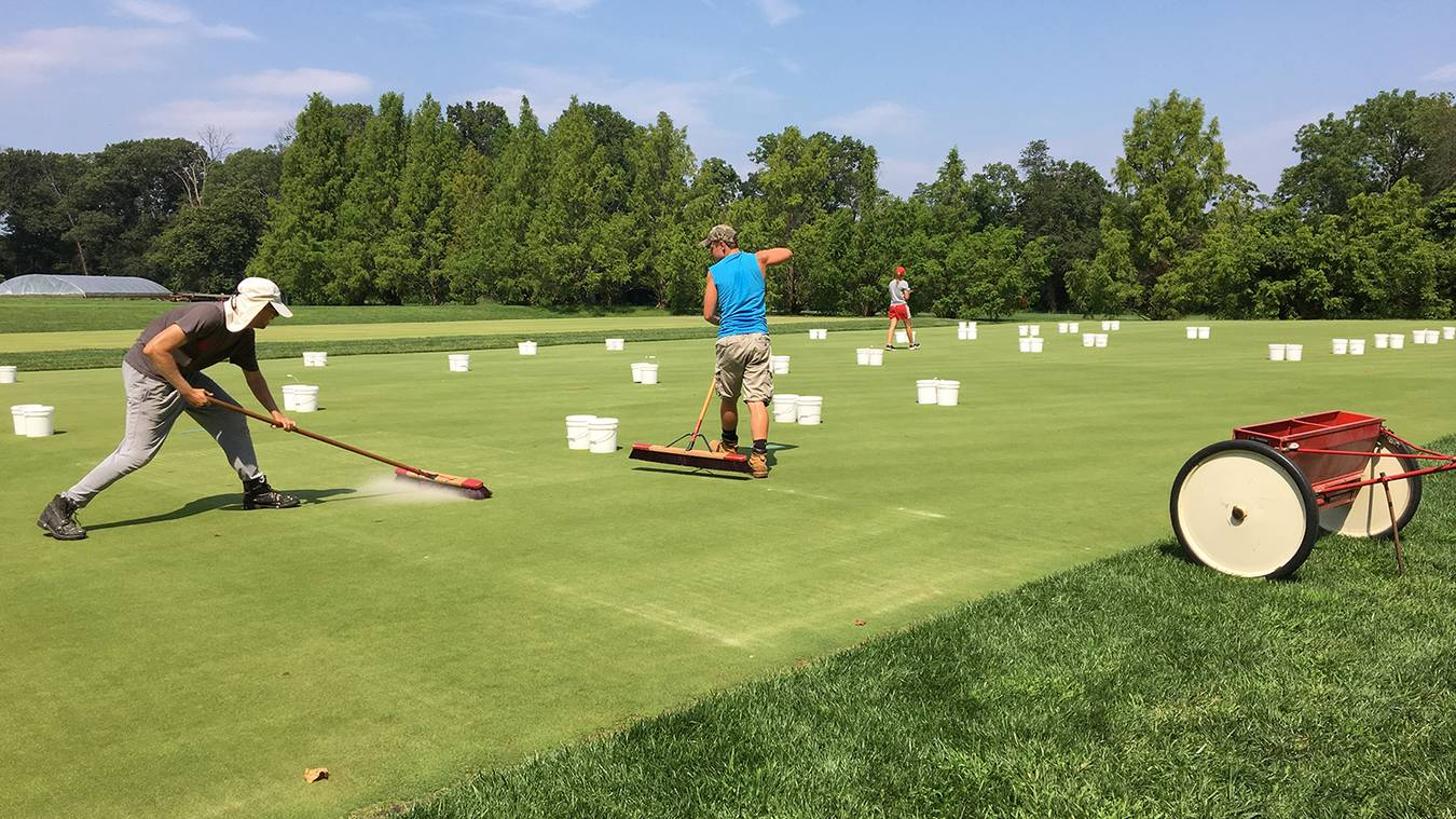 Benefits Of Light And Frequent Topdressing