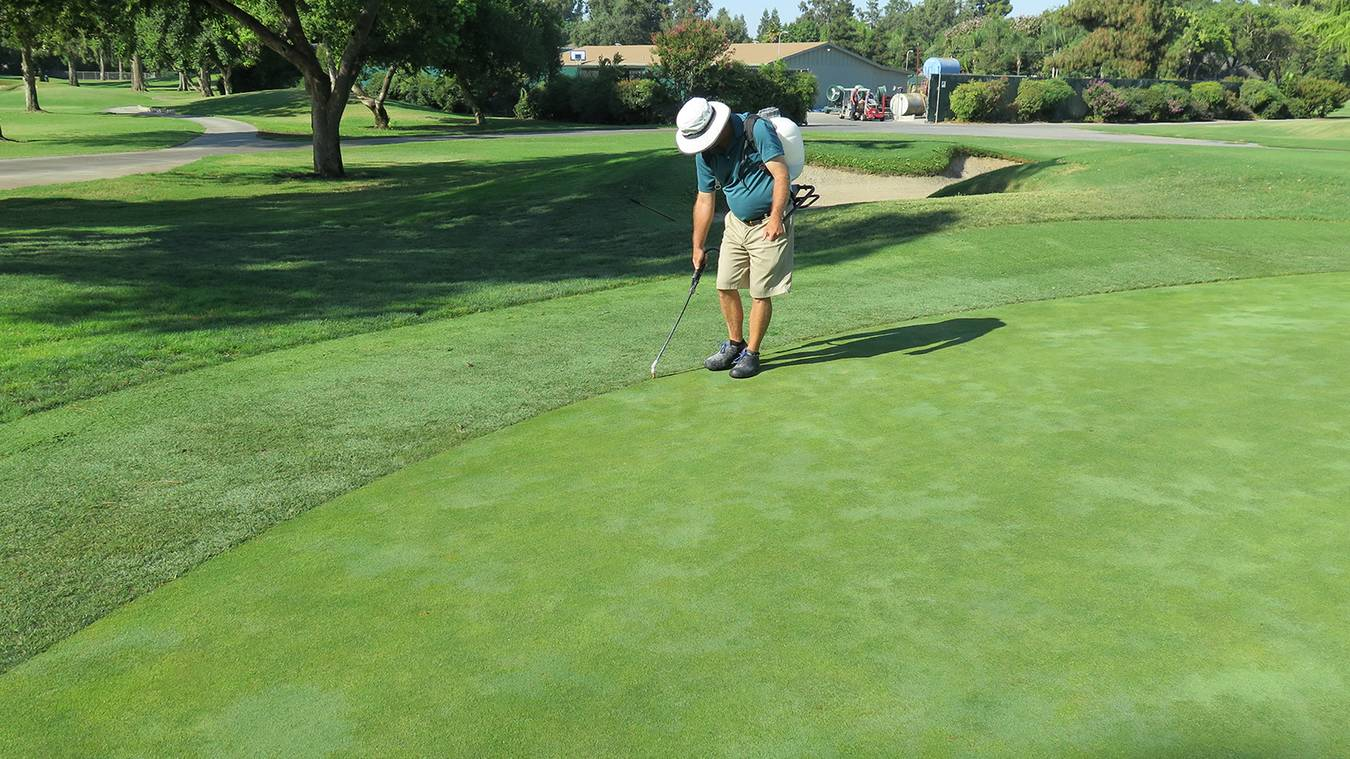 Discourage Warm-Season Grass Encroachment Into Putting Greens