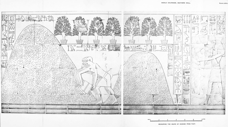 Benarkah Bengkulu Tanah Punt? Spt Cerita Kuil Hatshepsut 4