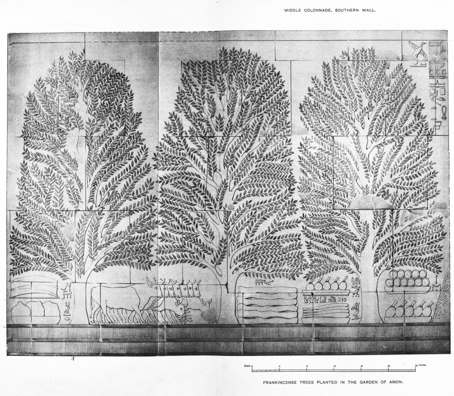 Benarkah Bengkulu Tanah Punt? Spt Cerita Kuil Hatshepsut 5